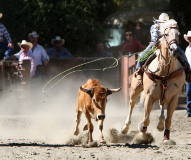 Truckee Events - Truckee Championship Rodeo